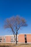 Edificio y árbol foto de archivo