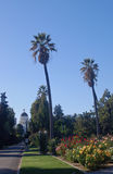 Edificio y palmeras del capitolio de California Fotos de archivo libres de regalías