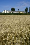 Edificios agrícolas y campo de trigo Fotos de archivo libres de regalías