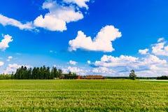Edificios agr?colas rojos y campo verde del trigo del verano en Finlandia foto de archivo