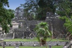 Edificios en Tikal, Guatemala del maya Imagen de archivo