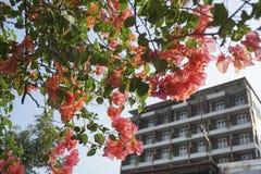 Edificios que enmarcan de las flores rojas Fotografía de archivo libre de regalías