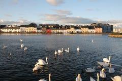 Edificios y cisnes en agua Fotos de archivo