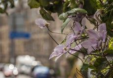 Edimbourg, Ecosse, le BRITANNIQUE - bâtiments et fleurs photographie stock libre de droits