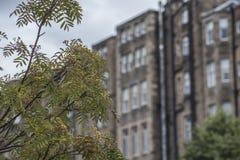 Edimbourg, Ecosse, le BRITANNIQUE - un fond de quelques vieux bâtiments image libre de droits