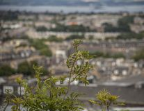 Edimbourg, Ecosse - vieilles maisons à l'arrière-plan photo libre de droits