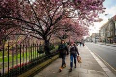 Edimburgo, Escocia - 27 de abril de 2017: Gente que camina a lo largo de príncipe Street Gardens con los blossons de la cereza po imagenes de archivo
