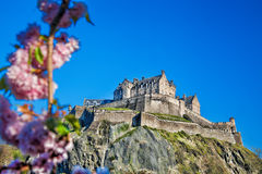 Edinburgh castle with spring tree in Scotland Stock Photo