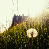 Edinburgh castle at sunset with grass and dandelion Royalty Free Stock Photography