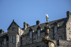 Edinburgh city historic Castle Rock sunny Day sea gull ross fountain Royalty Free Stock Image