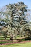 Edinburgh Royal Botanical Garden Royalty Free Stock Image