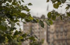 Edinburgh, Schotland - een achtergrond van sommige oude gebouwen stock foto