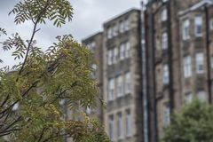Edinburgh, Scotland, the UK - a background of some old buildings. This image shows a view of some old buildings in Edinburgh, Scotland, the UK. It was taken on royalty free stock image