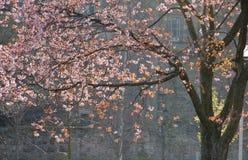 Edinburgh in spring Royalty Free Stock Photo