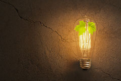 Edison Lightbulb Tree Stock Images