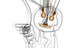 Edison Lightbulbs Face Stock Image