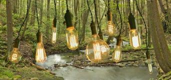 Edison Lightbulbs Woods Stock Photos