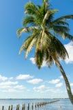 Edison Pier en rivière de Caloosahatchee, Fort Myers, la Floride, Etats-Unis Photos stock