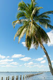 Edison Pier i den Caloosahatchee floden, Fort Myers, Florida, USA Arkivfoton