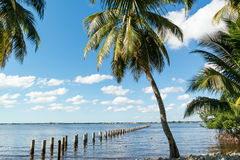 Edison Pier i den Caloosahatchee floden, Fort Myers, Florida, USA Arkivbild