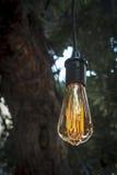 Edison style light bulb Stock Image