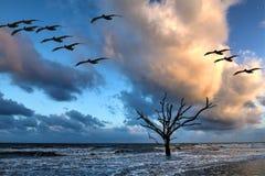 Edisto Island, Botany Baby Beach. Oak tree submersed in water at sunrise with storm clouds in the boneyard beach of Edisto Island, South Carolina Royalty Free Stock Photos