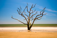 Edisto Island South Carolina Stock Images