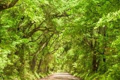 Edisto Island South Carolina Royalty Free Stock Photography