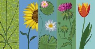 editable вектор установленный цветками Стоковая Фотография RF