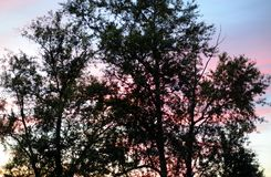 editable eps jpg πλήρως δέντρα ηλιοβασιλέματος Στοκ φωτογραφία με δικαίωμα ελεύθερης χρήσης