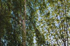 editable eps jpg πλήρως δέντρα ηλιοβασιλέματος Στοκ Φωτογραφία