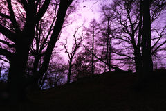 editable eps jpg πλήρως δέντρα ηλιοβασιλέματος Στοκ εικόνα με δικαίωμα ελεύθερης χρήσης
