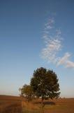 editable eps w pełni sunset jpg drzewa obraz stock