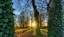 editable eps w pełni sunset jpg drzewa Obraz Royalty Free