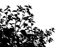 Generic vegetation silhouette Royalty Free Stock Photos