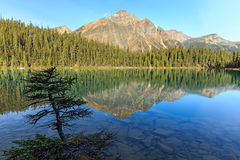Edith Cavell Lake stock photos