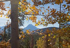 Edith Cavell Mountain. And Athabasca pass framed through autumn yellow trees in Canada stock photo