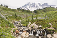 Edith Creek and Mt. Ranier. Tahoma (Mt. Ranier) looms above idyllic Edith Creek above Myrtle Falls Mt. Ranier National Park, Paradise, Washington stock photography