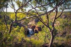 Edith Falls die tussen bomen, Katherine, Australië wordt ontworpen Stock Foto