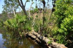 Edith falls, Nitmiluk National Park, Northern Territory, Australia Royalty Free Stock Photos