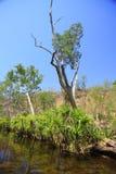 Edith falls, Nitmiluk National Park, Northern Territory, Australia Stock Photography