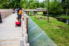 Editorial - July 29, 2014 at Parc Safari, Quebec , Canada on a b. Editorial - July 29, 2014 High Structure for visitors at Parc Safari, Quebec , Canada on a stock images
