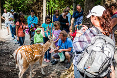 Editorial - July 29, 2014 at Parc Safari, Quebec , Canada on a b. Editorial - July 29, 2014 at the Parc Safari, Quebec , Canada inside the Deer Forest where is royalty free stock image