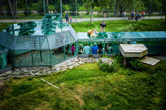 Editorial - July 29, 2014 at Parc Safari, Quebec , Canada on a b. Editorial - July 29, 2014. View from the balcony of the Lion Glass Tunnel at Parc Safari royalty free stock image