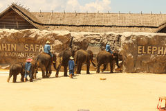 Editorial-1st Show group elephant on the floor in the zoo royalty free stock images