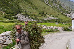 Editoriale: 22 agosto 2011: Chitkul, Sangla, Himachal, India: Alimento di trasporto dell'uomo locale non identificato per bestiam Immagine Stock Libera da Diritti