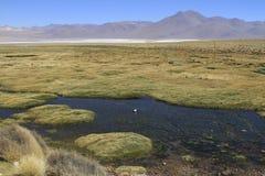 Eduardo Alveroa, Uyuni Bolivia Royalty Free Stock Photography