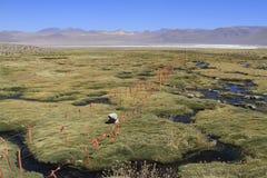 Eduardo Alveroa, Uyuni Bolivia Stock Images