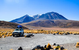 Eduardo Avaroa Andean Fauna National reserv, Bolivia Arkivbild