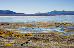 Eduardo Avaroa Andean Fauna National Reserve, Bolivia Royalty Free Stock Photo
